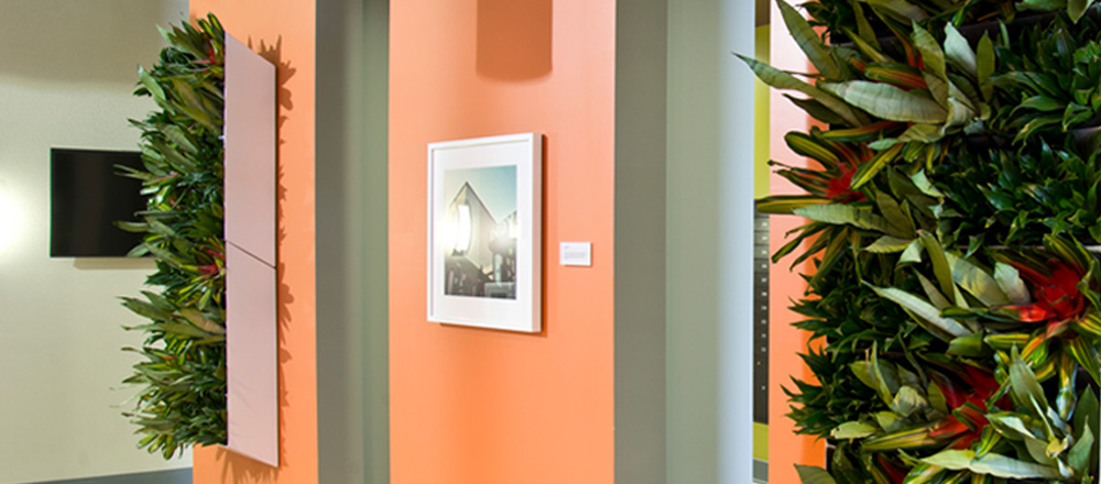 Living walls / planter portraits in a modern space.