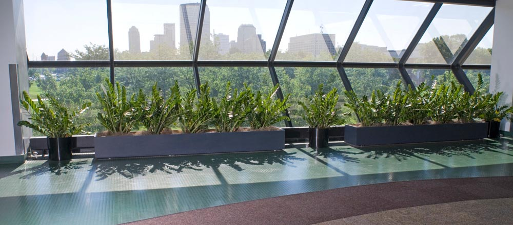 Green plants lining window with city view at IUPUI.