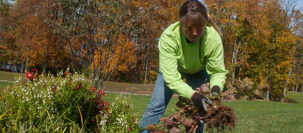 Engledow employee doing gardening work.