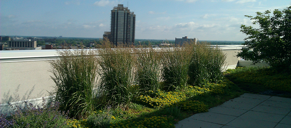Grasses on the rooftop of Downtown Indianapolis building