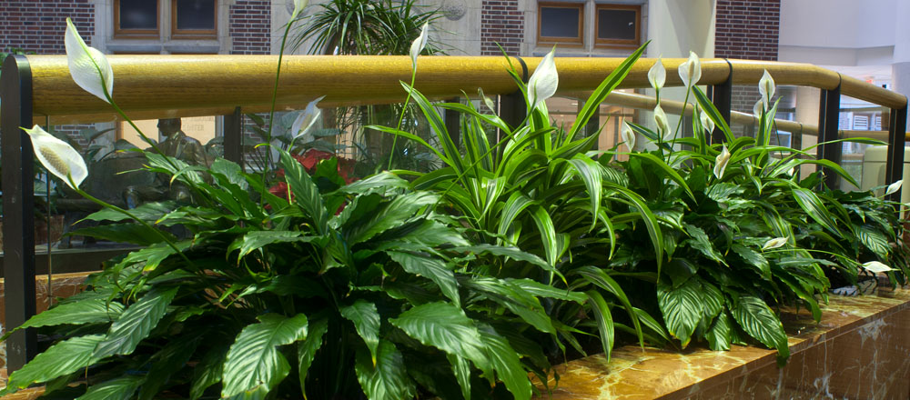 Blooming plants in atrium at Riley Hospital.