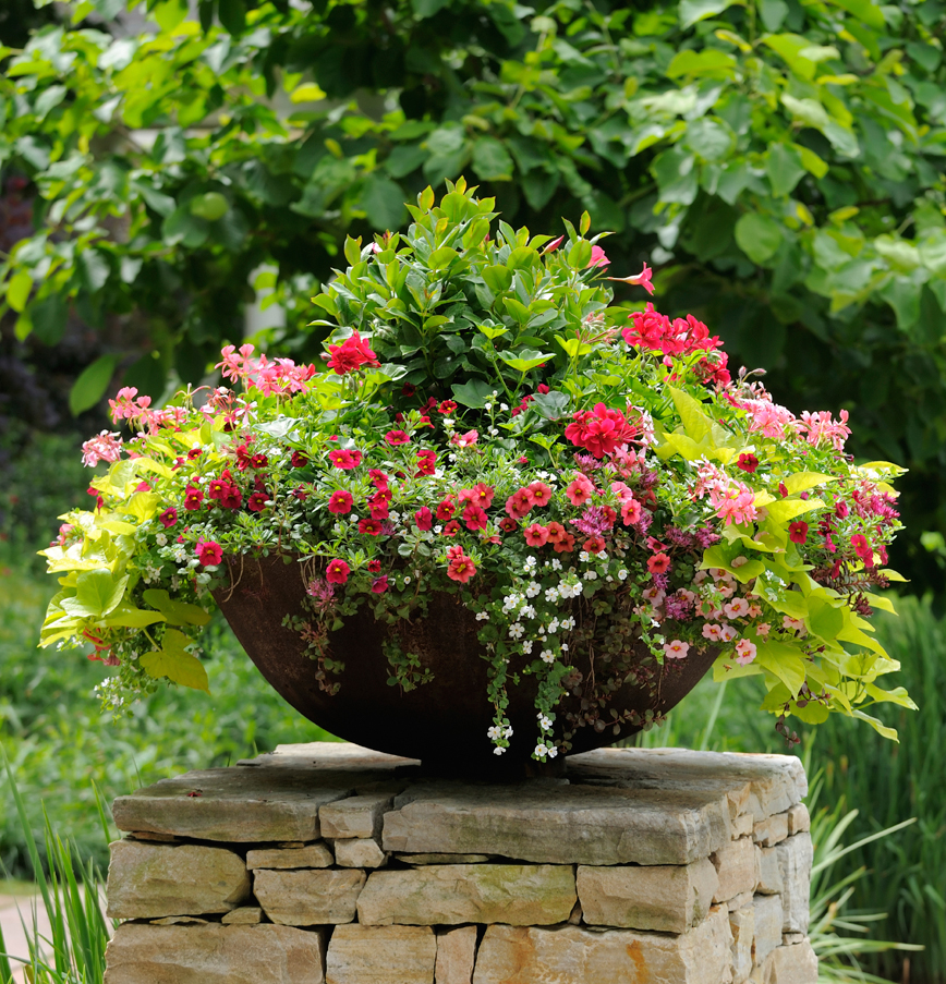 Thrill fill and spill three easy steps to container gardening engledow group - Container gardens for sun ...