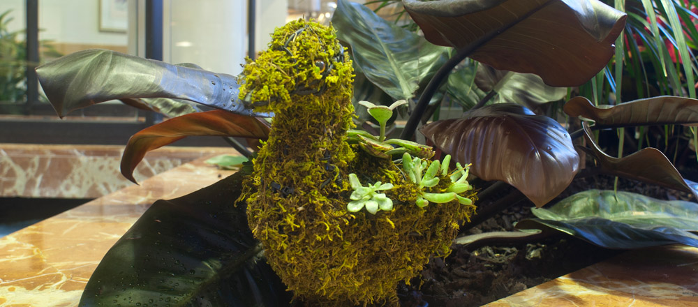 Detail of moss and succulent filled duck hiding in plants.