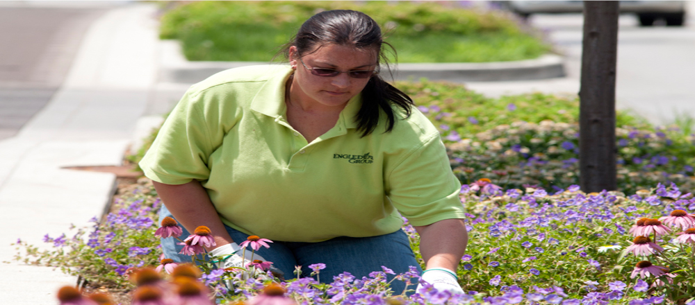 Engledow employee maintaining flower bed