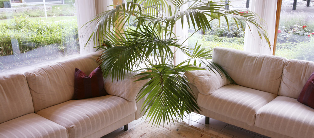 Couches and plant