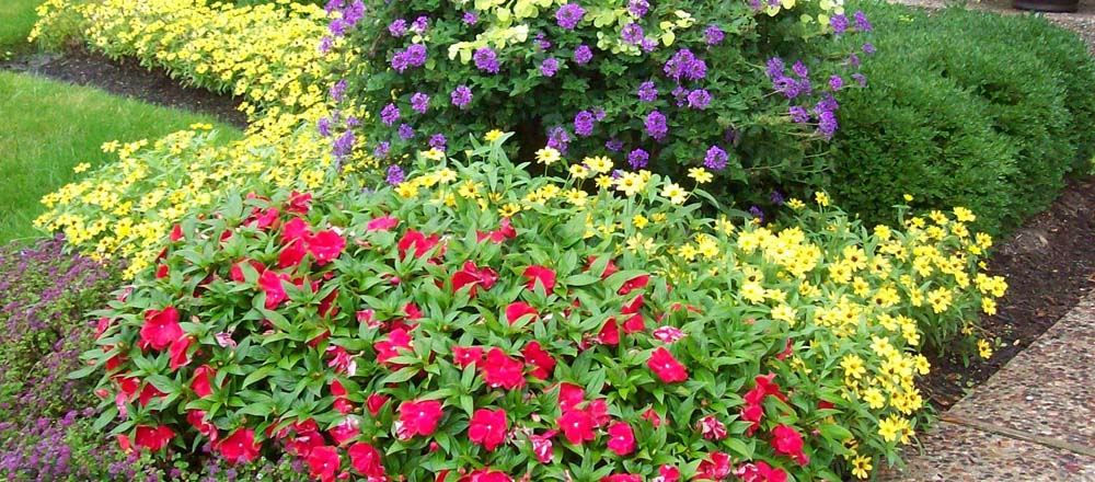 Engledow flower tree and shrub care indianapolis for No maintenance flowering shrubs