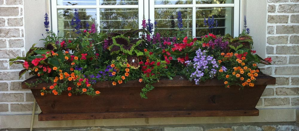 Seasonal flowers in window box.