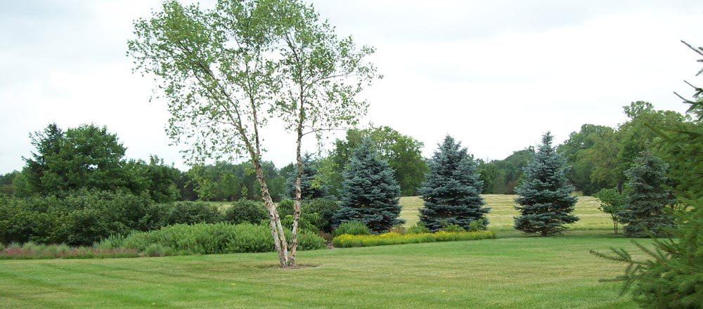 Green grass, trees and shrubs in yard.