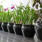 Keep Your Indoor Plants Happy Through Winter