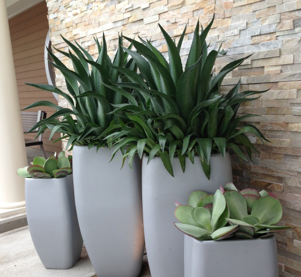 Simple Yet Elegant Tropical Containers Engledow Group