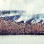 The Benefits of Burning Prairie Grass
