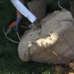 Engledow on Indy Style: Preparing the Root Ball for Planting