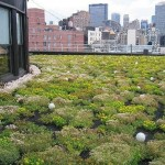 Green Roof with Skyline in Background