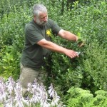Engledow Group on Indy Style: Pruning Back Plants with Excessive Growth