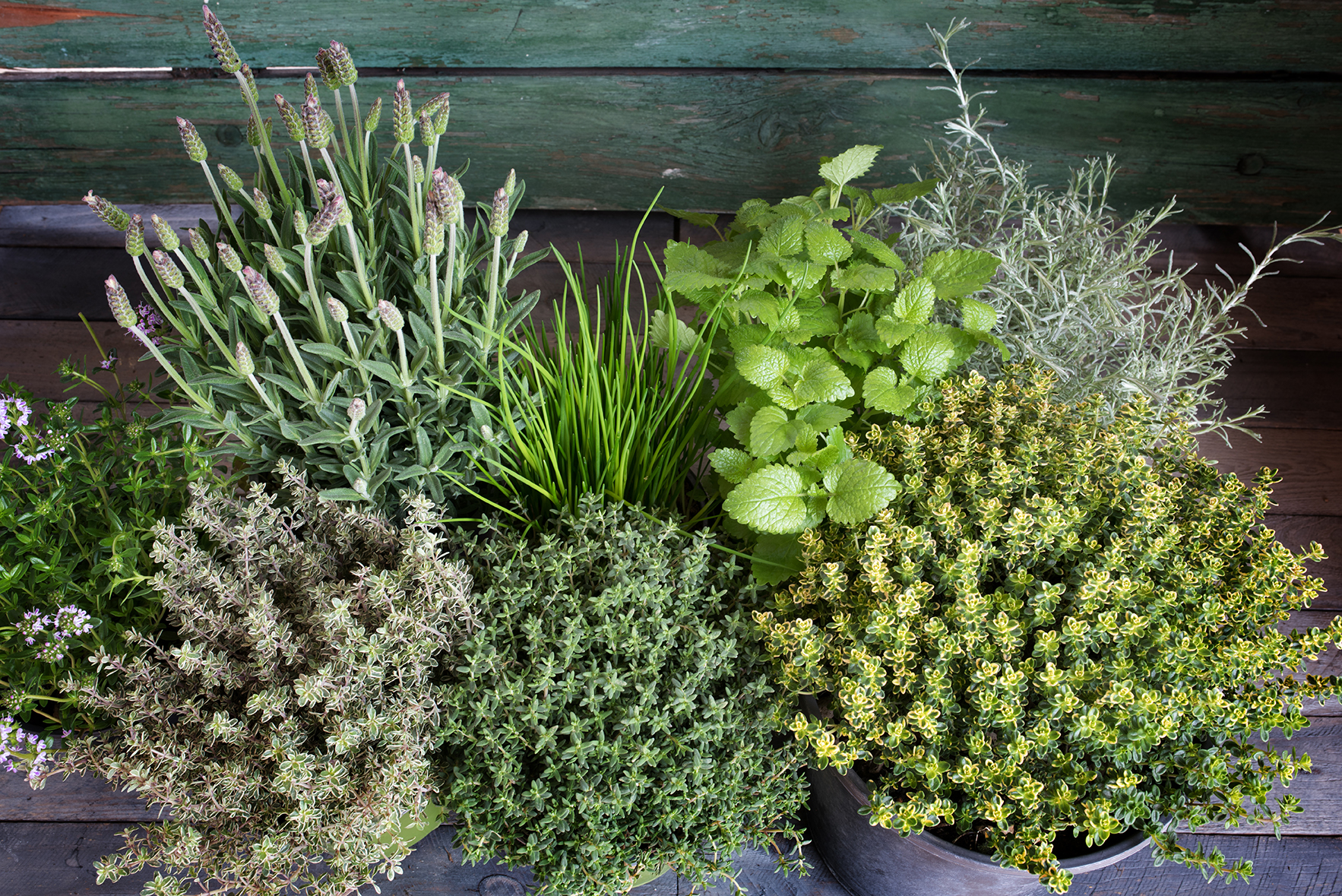 Small E Herb Garden On A Rustic Wooden Table