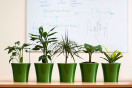 Office plants in conference room