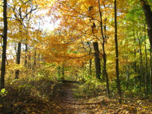 Hiking trails with fall leaves in brown county state park