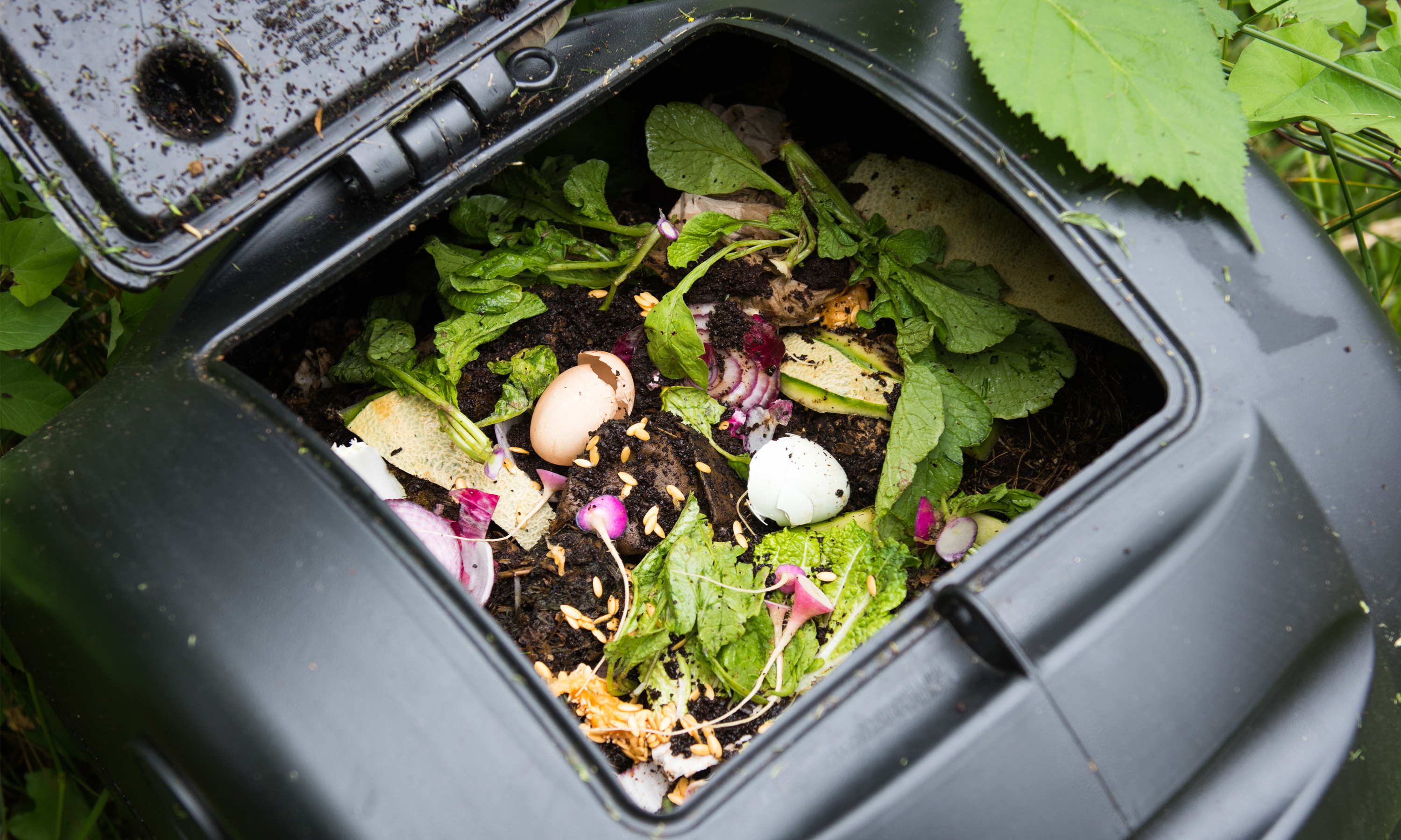 Compost bin with an open lid showing landscape debris, egg shells, and vegetable scraps.