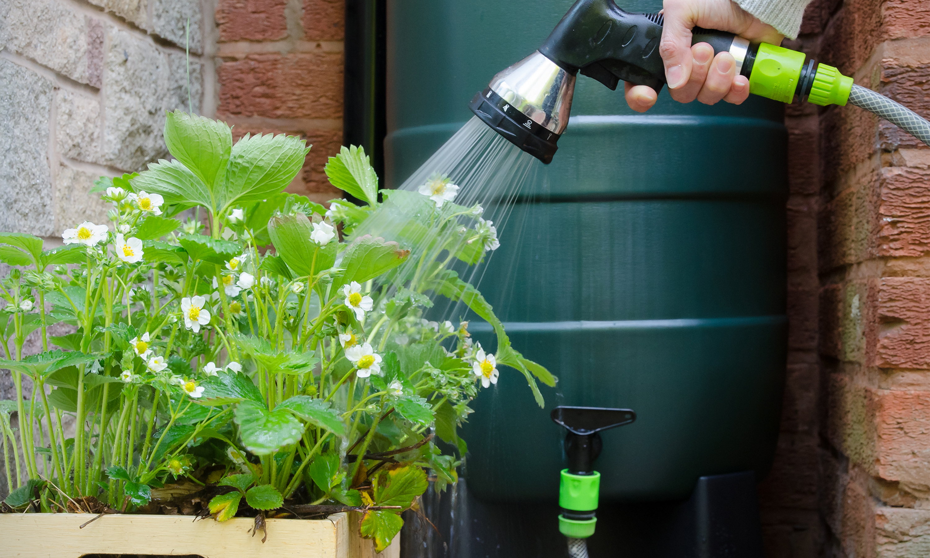 Person watering plants using water collected in rain barrel
