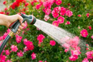 Watering flowers using a hose with sprayer attachment