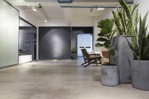 Interior plants in a modern office environment