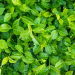 Looking for Groundcover Alternatives to Grass? Here Are Some Ideas.