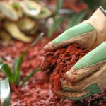 Why You Should Consider Mulching in Late Fall or Early Winter
