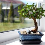 Ready to Take on One of Gardening's Greatest Challenges? Enter the Mighty Bonsai Tree.