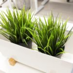 Six Reasons You Shouldn't Use Artificial Plants at Your Office