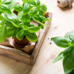 How to Get Started with Indoor Vegetable Gardening