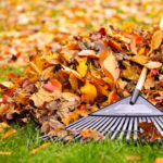 Rake vs. Leaf Blower: What's the Best Choice?