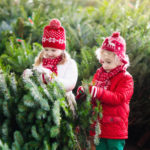 Christmas Tree 101: Branches-to-Trunk Tips for a Beautiful Holiday Season